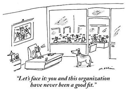 Best New Yorker Cartoons With Cats